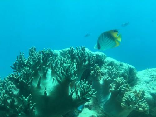 グァムの海中1