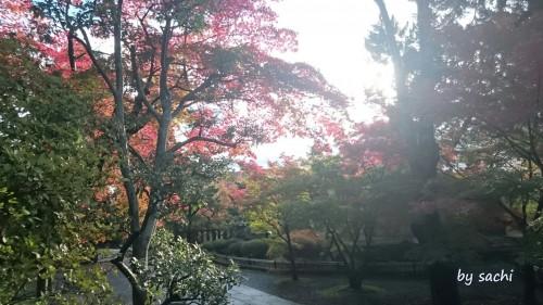 by sachi 11月10日光明寺10