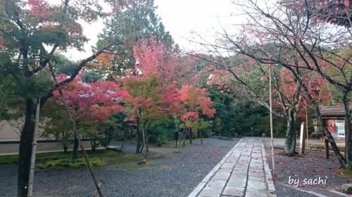 by sachi 11月10日光明寺8