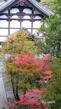 by sachi 11月7日光明寺11