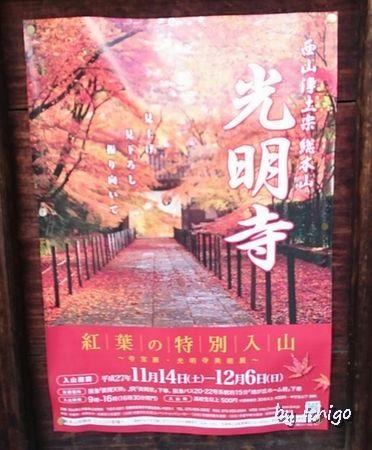 ichigo 11月10日光明寺6r