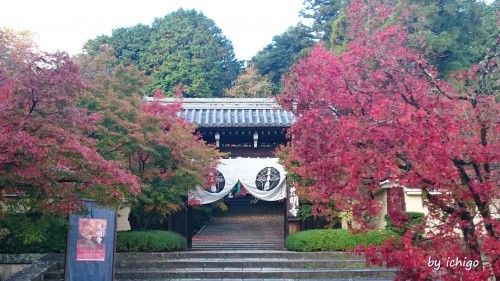 ichigo11月10日光明寺1