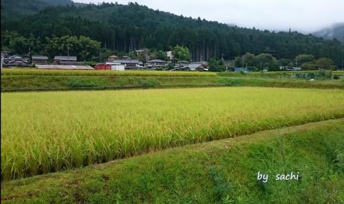 sachi 京都夏の終わりの大原3
